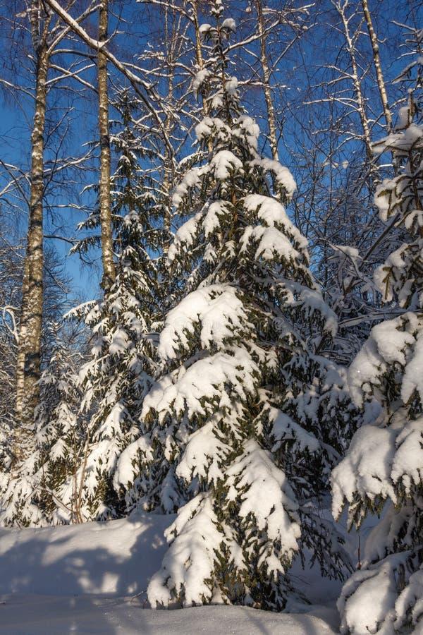 Uma árvore de Natal sob a neve fotos de stock royalty free