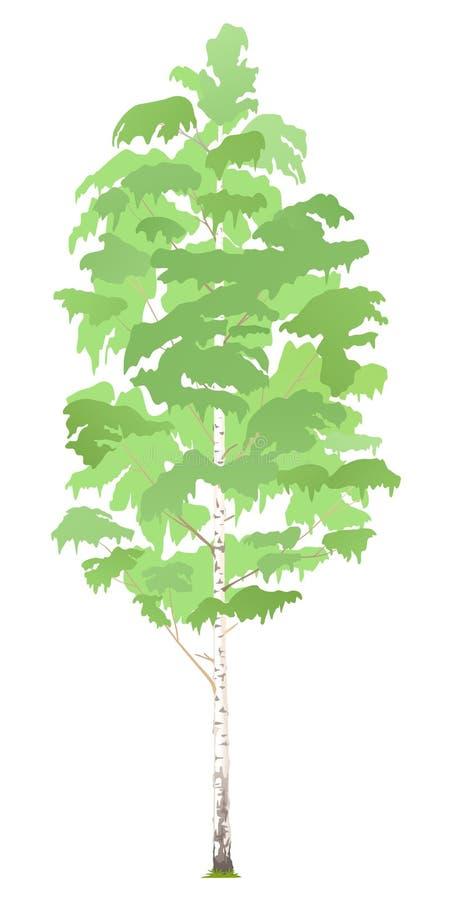 Uma árvore de vidoeiro isolada ilustração stock