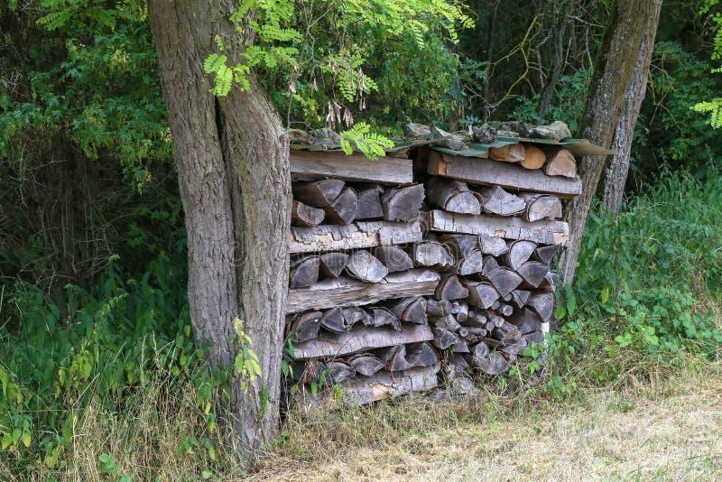 Uma árvore dequeimadura nas madeiras entre as árvores fotos de stock royalty free