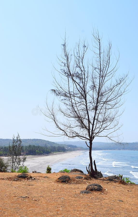 Uma árvore desencapada Leafless contra o céu azul com fundo da praia imagens de stock