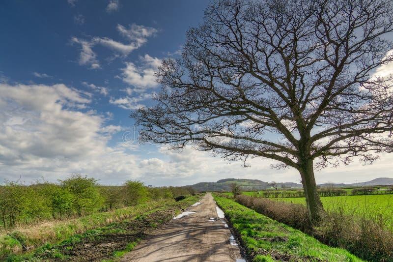 Uma árvore desencapada pelo lado de uma pista longa, reta do país imagens de stock royalty free