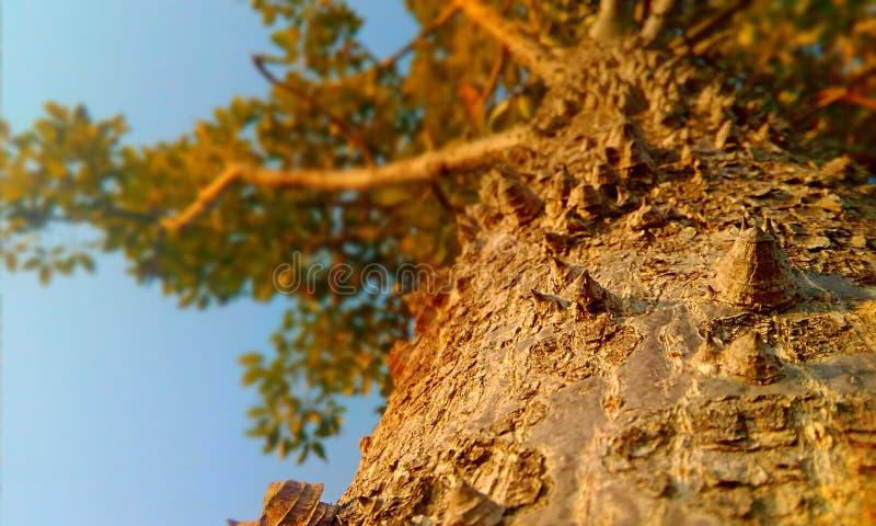 Uma árvore do crid fotos de stock royalty free