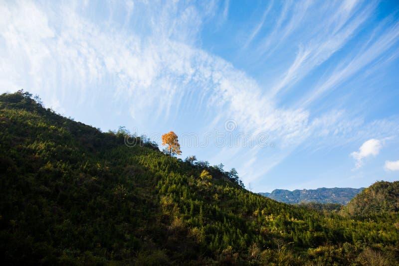 Uma árvore dourada no monte, fotos de stock royalty free