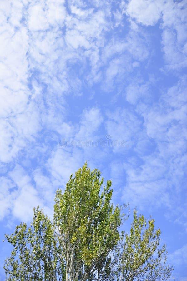 Uma árvore e um céu azul em França imagens de stock