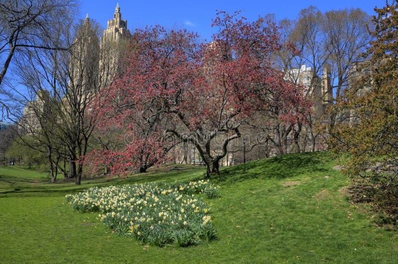 Uma árvore em Central Park foto de stock
