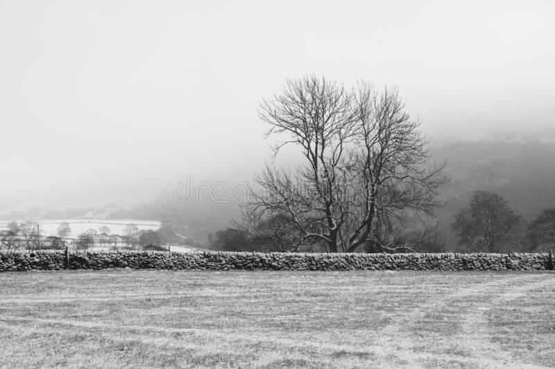 Uma árvore em um campo coberto na neve fotos de stock