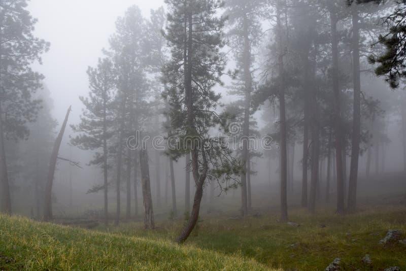 Uma árvore feliz em uma manhã nevoenta imagens de stock