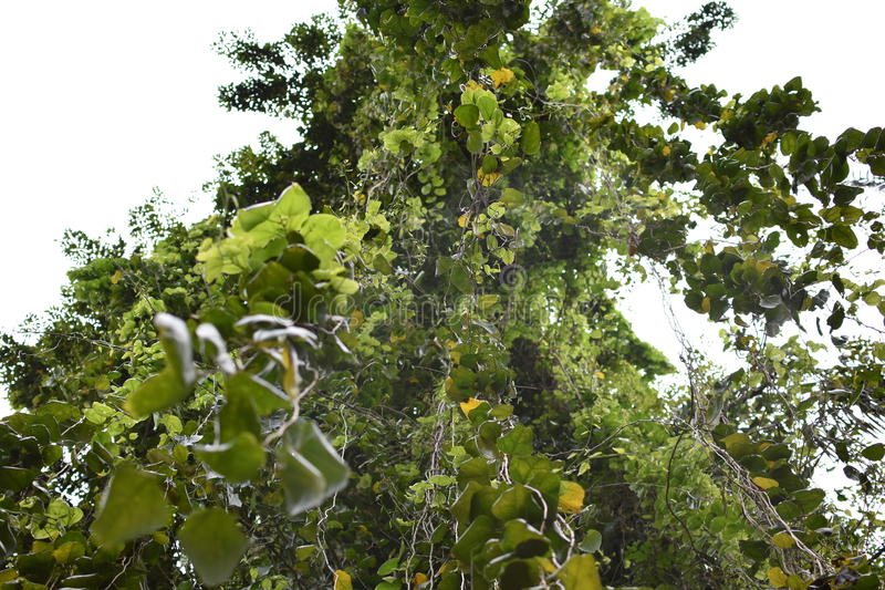 Uma árvore grande imagens de stock royalty free