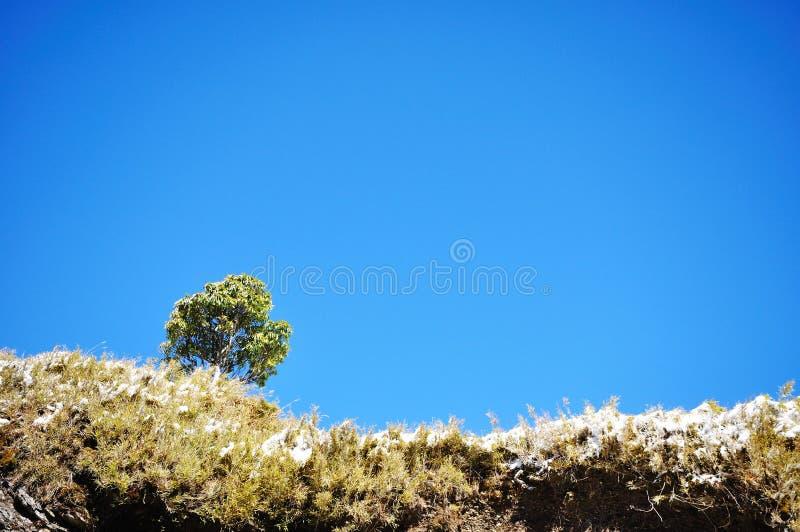 Uma árvore isolada fotos de stock royalty free