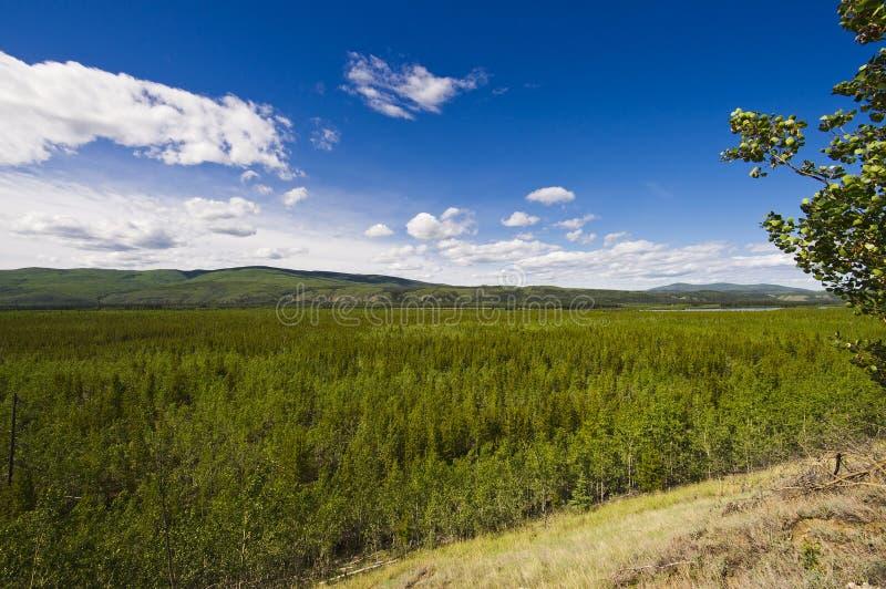 Uma árvore larga encheu a seção do vale do Rio Yukon imagens de stock