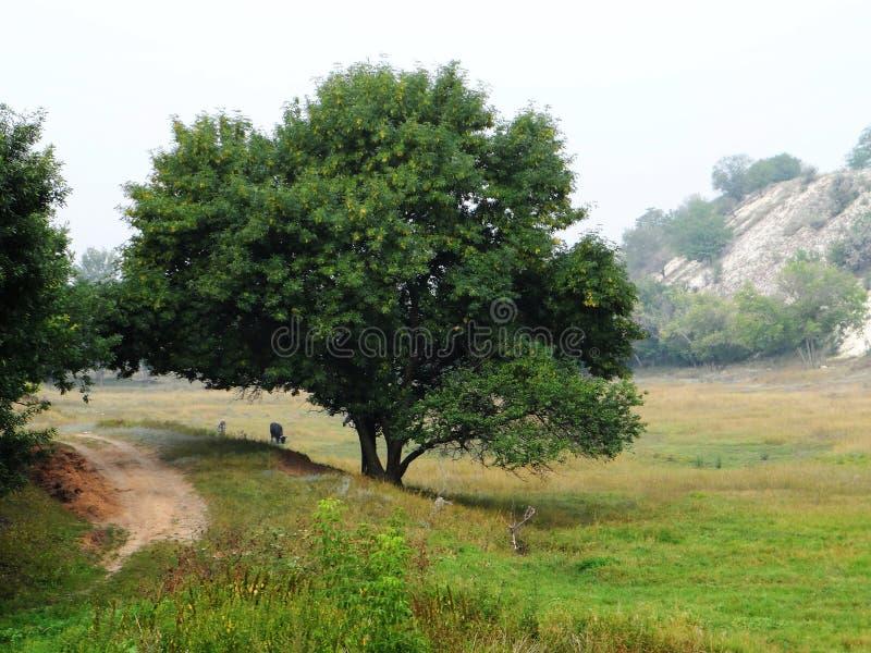 Uma árvore na ravina imagem de stock royalty free