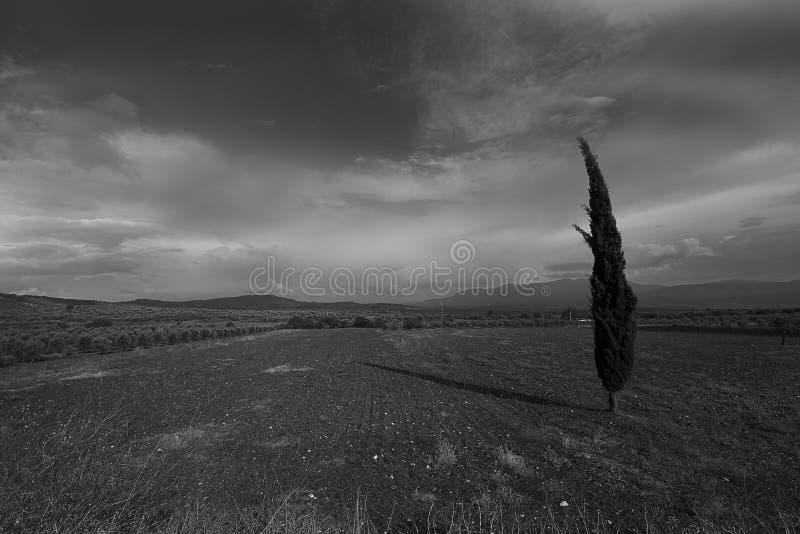 Uma árvore no campo no dia escuro de novembro Serenidade Fundo de novembro sadness Dia nevoento e misterioso Somente um suporte d imagens de stock royalty free