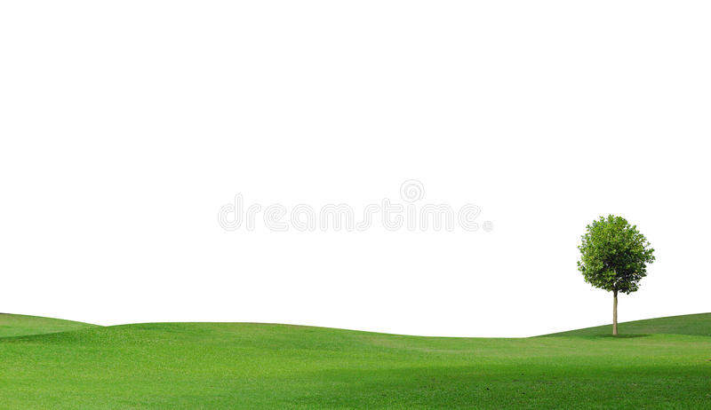 Uma árvore no campo verde fotografia de stock