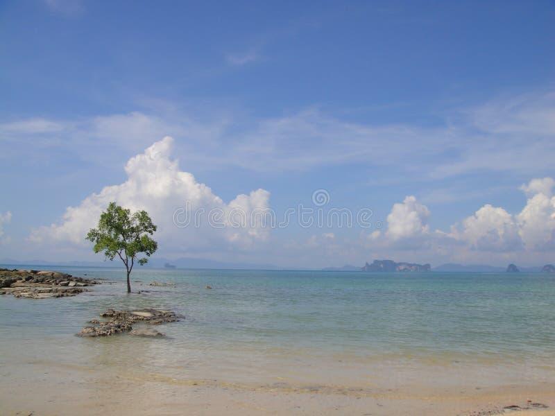 Uma árvore no mar foto de stock