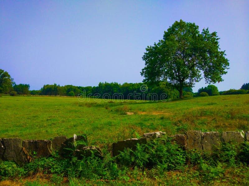Uma árvore no meio de um prado da grama verde com a floresta nos vagabundos fotos de stock