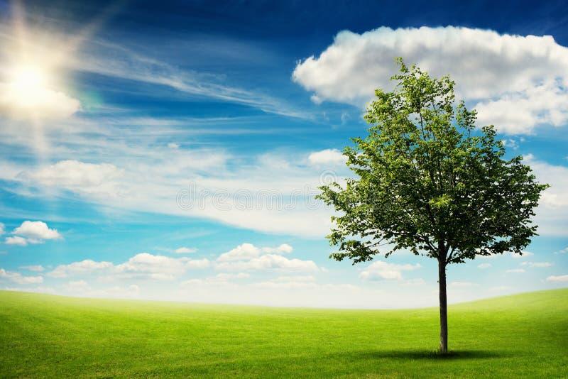 Uma árvore no prado verde imagem de stock royalty free