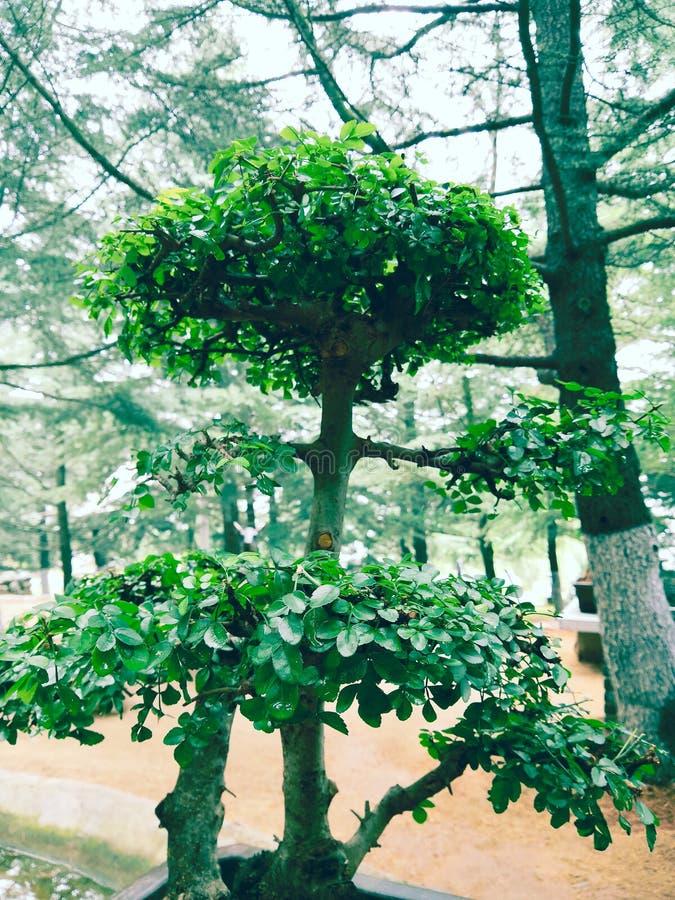 Uma árvore original no parque imagem de stock royalty free