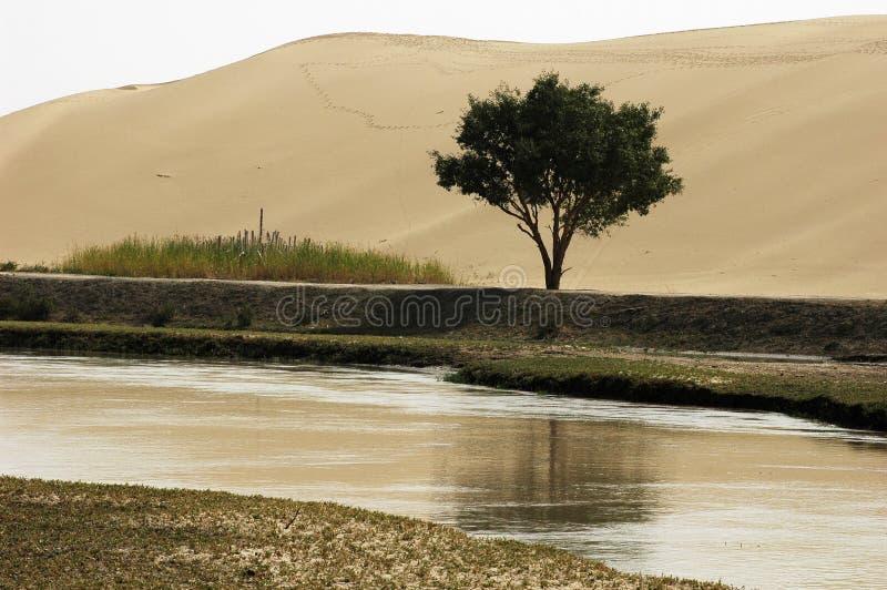 Uma árvore pela água e pelo deserto foto de stock