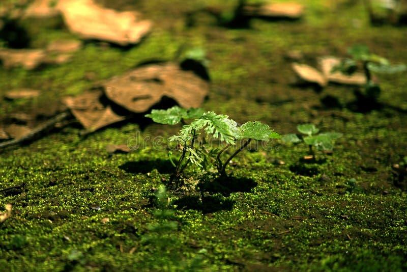 Uma árvore pequena intervem no musgo foto de stock