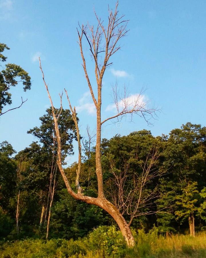 Uma árvore perfeita da imperfeição fotografia de stock royalty free