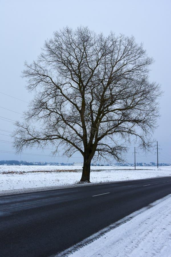 Uma árvore perto da estrada no inverno fotos de stock royalty free