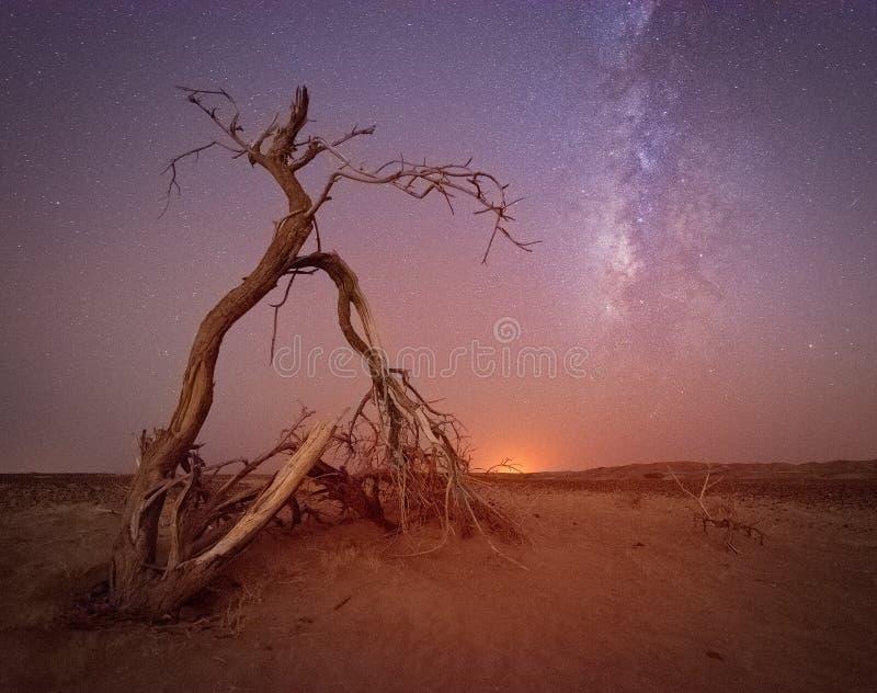 Uma árvore que sustenta no deserto árabe seco fotografia de stock