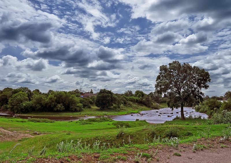 Uma árvore só cresce no banco de rio contra um céu azul com nuvens brancas fotografia de stock