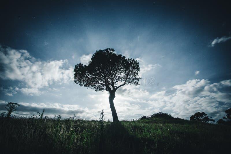 Uma árvore só na noite imagens de stock royalty free