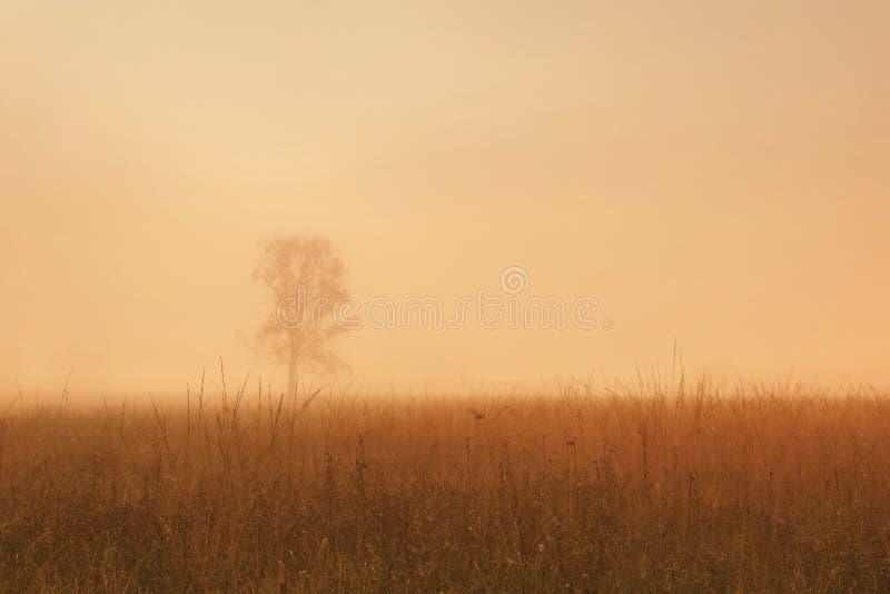 Uma árvore só no campo do outono na névoa imagens de stock royalty free