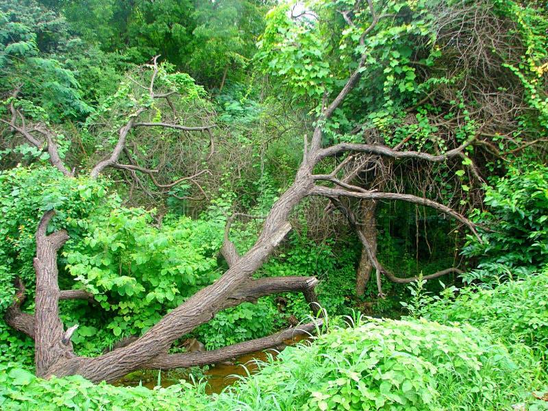 Uma árvore seca caída oblíqua entre as hortaliças foto de stock royalty free