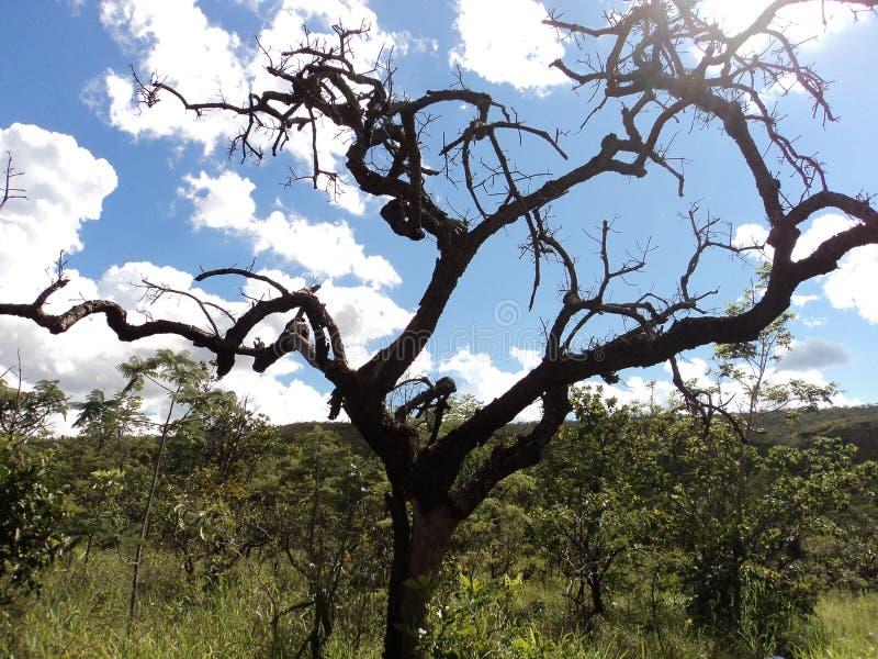 Uma árvore seca no selvagem imagens de stock