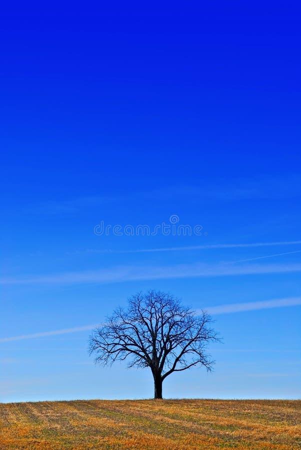 Uma árvore sob um céu azul fotografia de stock