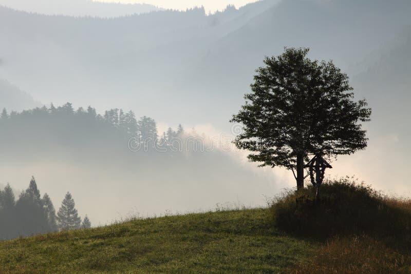 Uma árvore solitária no campo no crepúsculo imagens de stock