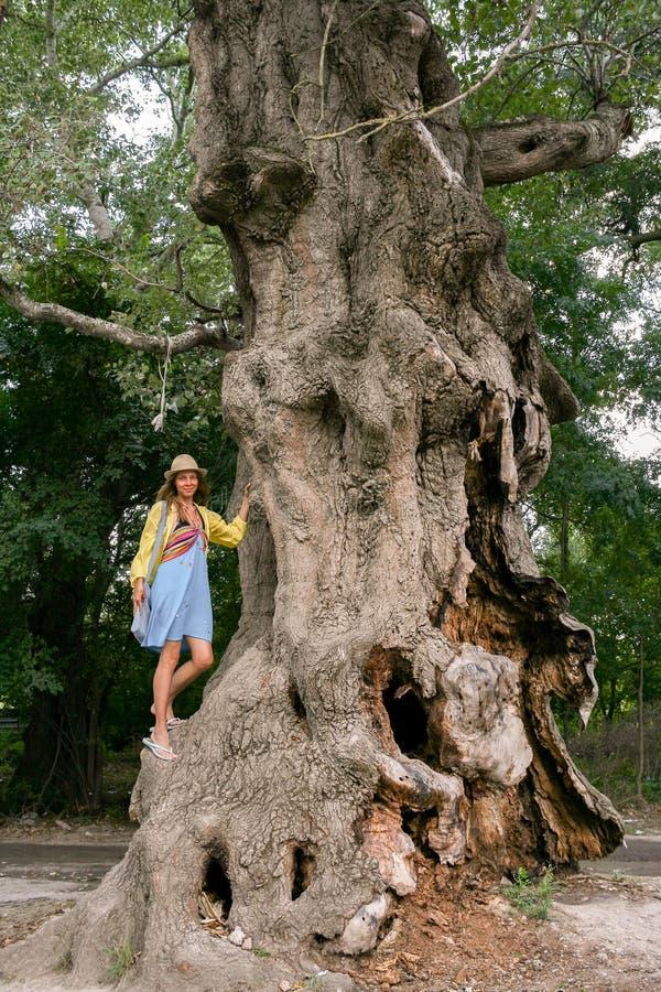Uma árvore sulcado enorme e a menina estão estando escalaram nele fotografia de stock