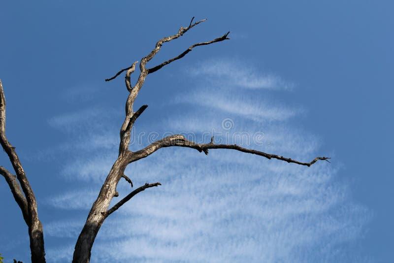 Uma árvore velha imagens de stock royalty free