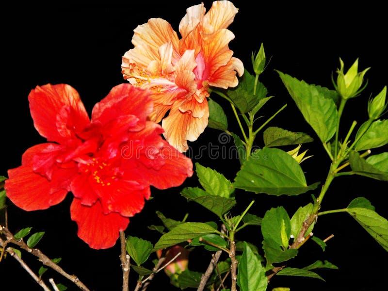 Uma última flor imagem de stock royalty free