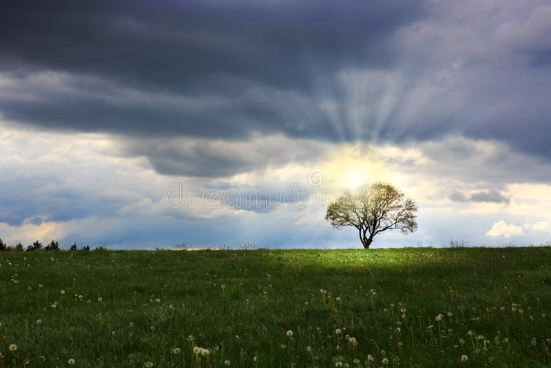 Uma única árvore é mostrada em silhueta contra um céu do por do sol em Alemanha foto de stock royalty free