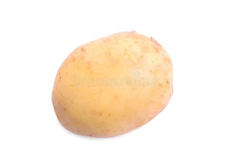 Uma única batata saboroso inteira, isolada em um fundo branco Um conceito cru, cru, fresco e maduro dos vegetais imagens de stock royalty free