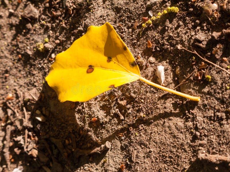 Uma única flor amarela no assoalho do solo à vista do dia imagens de stock