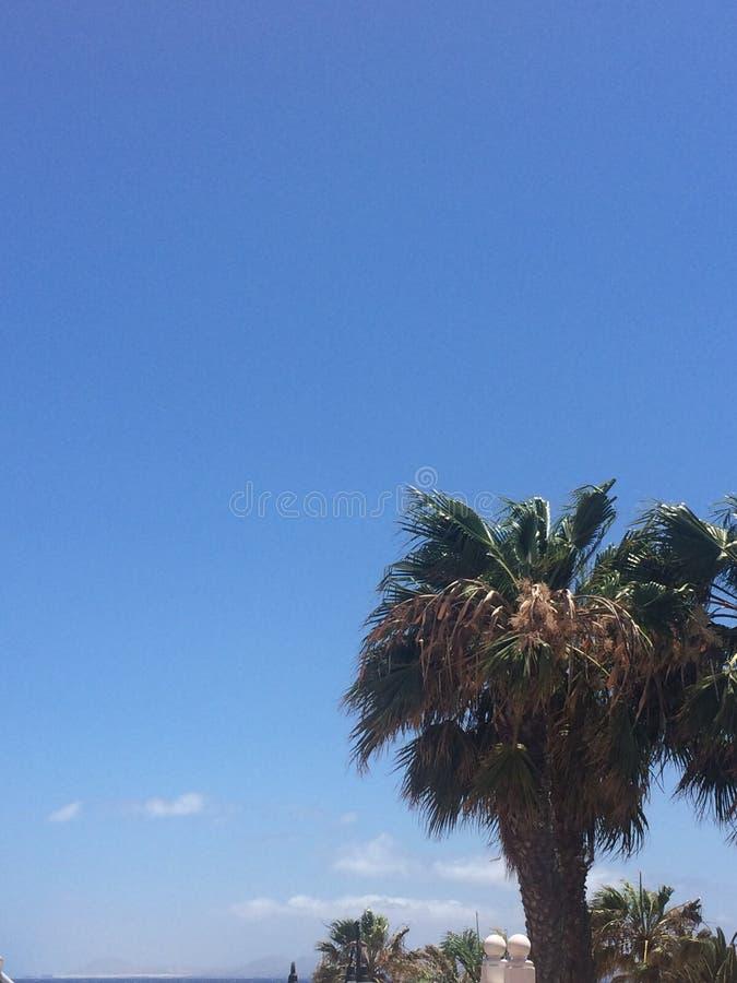 Uma única palmeira que enche o céu fotografia de stock