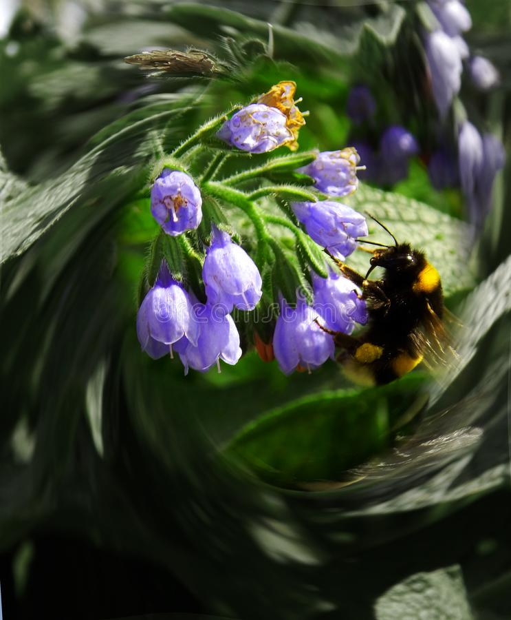 Uma abelha em uma flor em voo fotos de stock