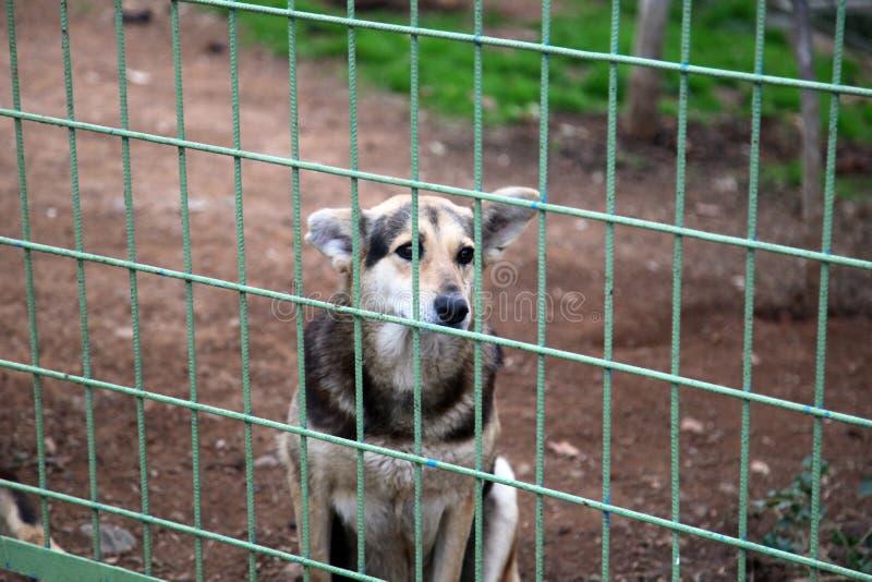 Uma adoção de espera do cão imagens de stock royalty free