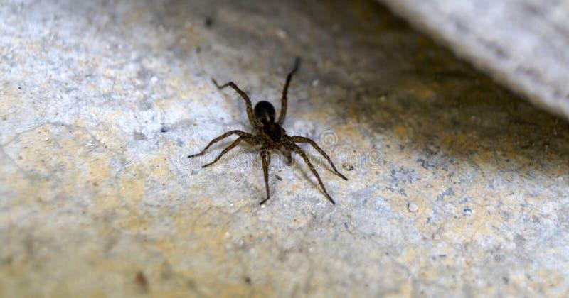 Uma aranha de jardim imagens de stock
