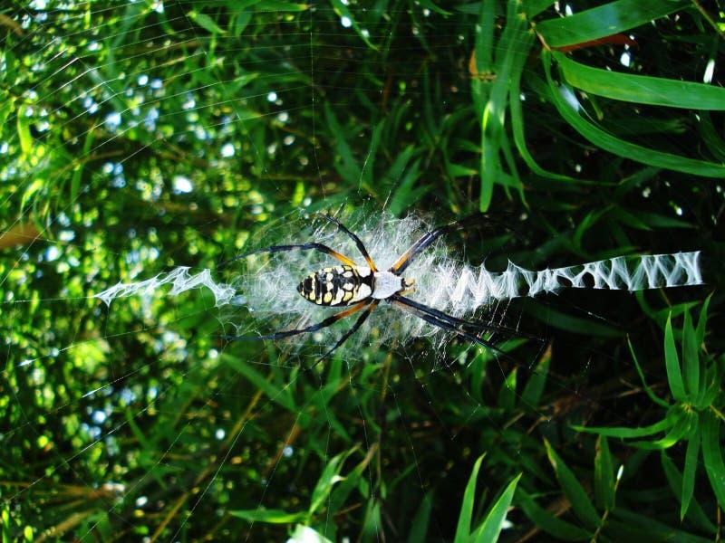 Uma aranha de jardim em sua rede fotografia de stock