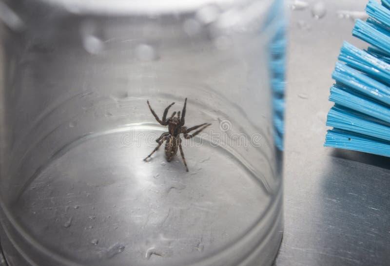 Uma aranha marrom prendida em um vidro da bebida em um dissipador fotos de stock