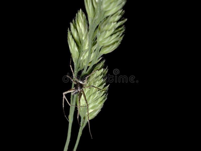 Uma aranha na grama no verão fotografia de stock royalty free