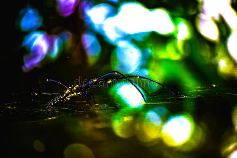 Uma aranha nova e rara encontrou no mais fporest indiano fotografia de stock