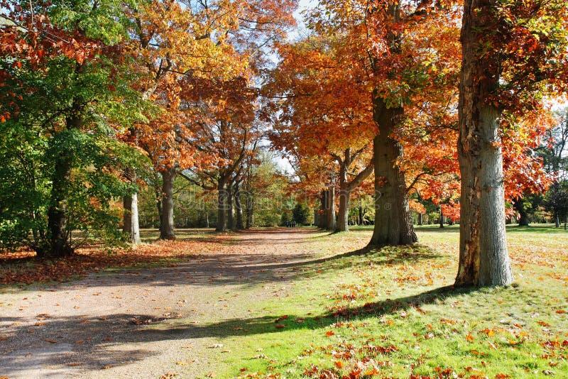 Uma avenida das árvores em cores do outono imagens de stock royalty free