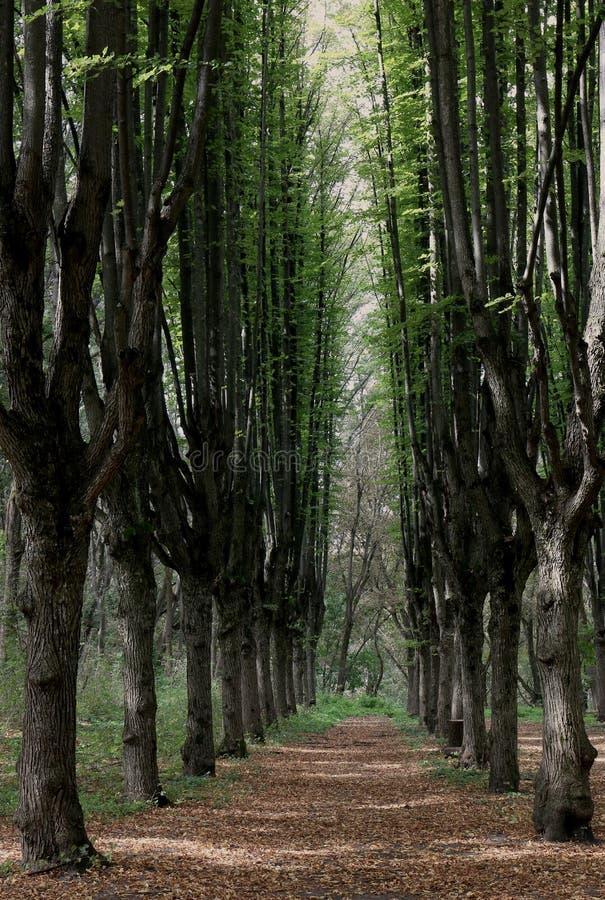 Uma avenida está em um parque velho foto de stock royalty free