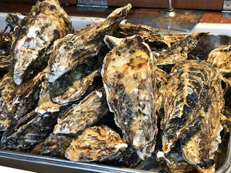 Uma bandeja de ostras grandes fotos de stock